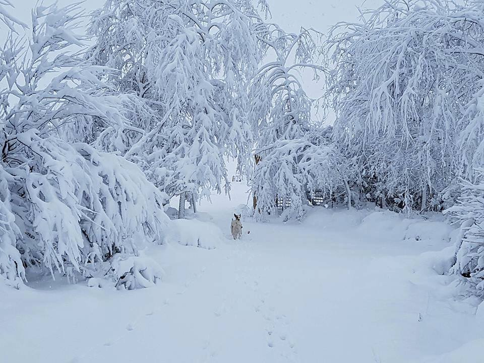Credit - Snow Report SA and Stephen Gilson : Brechan Farm Swartberg (kzn)
